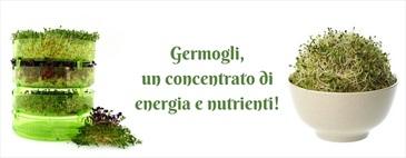 Germogli, un concentrato di energia e nutrienti!
